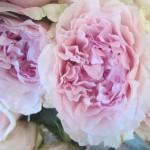 rosa-austin-miranda