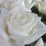 rosa-jeanne-moreau
